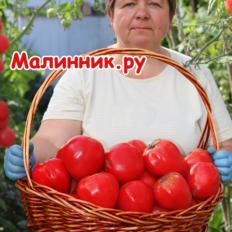 """Томат """"Бычье Сердце Минусинское Красное"""""""