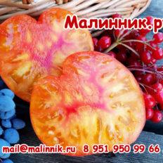 Сорт томата Русский Вихрь гном