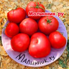 "Томат ""НЕПАСЫНКУЮЩИЙСЯ"""