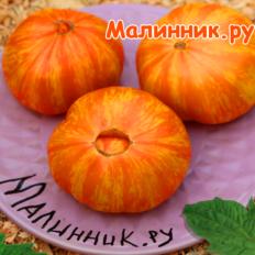 """Томат """"ПЛАН 9 ИЗ ОТКРЫТОГО КОСМОСА"""""""