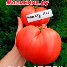 """Томат """"ЗАДНИЦА ОБЕЗЬЯНЫ"""""""