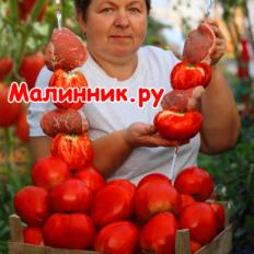"""Томат """"КУСТ ГОВЯДИНЫ"""" фото"""
