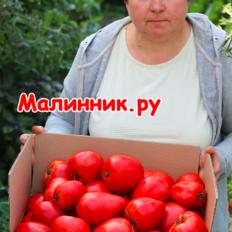 """Томат """"ЗНАМЕНИТАЯ КЛУБНИКА МИССИС ШЛАУБАХ"""" фото"""