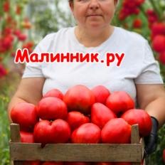 """Томат """"СЕРДЦЕ МИНУСИНСКА"""" фото"""