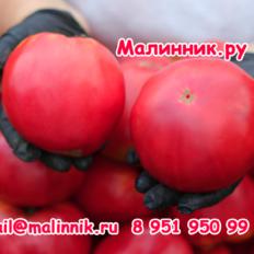 """Томат """"БОЛЬШАЯ МАЛИНА"""" фото"""