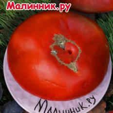 """Томат """"МИНУСИНСКИЙ ГИГАНТ"""""""